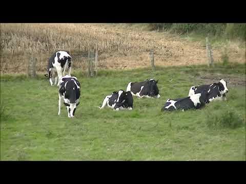 Organic Agriculture in UK. Cum Se Face Agricultura Bio (Eco) in Anglia.