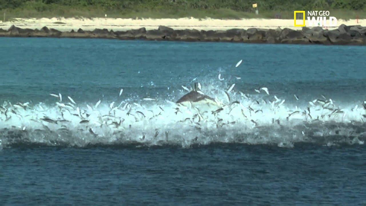 Le banquet des requins-tisserands