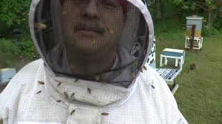 Euthanizing of a dangerous hive.