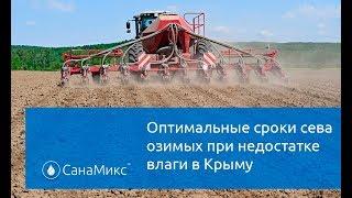 Оптимальные сроки сева озимых в засушливых условиях Крыма?