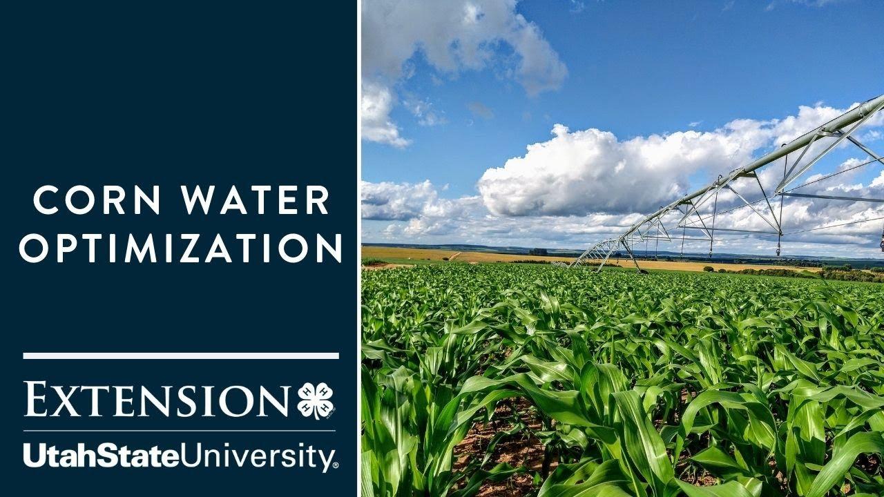 Corn Water Optimization