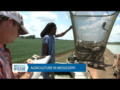 Agriculture In Mississippi | @ISSUE | MPB