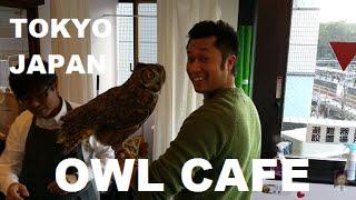 Owl Cafe Owl Village Harajuku Tokyo Japan 2016