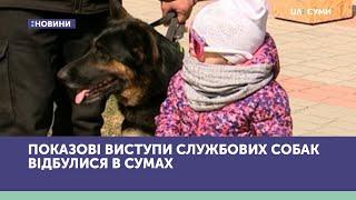 Показові виступи службових собак відбулися в Сумах