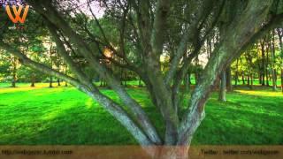Allah'ı Zikr'etmek Demek Ne Demektir?  (Ahmed Hulusi)-(Bölüm 1) - Webgezer.mpg