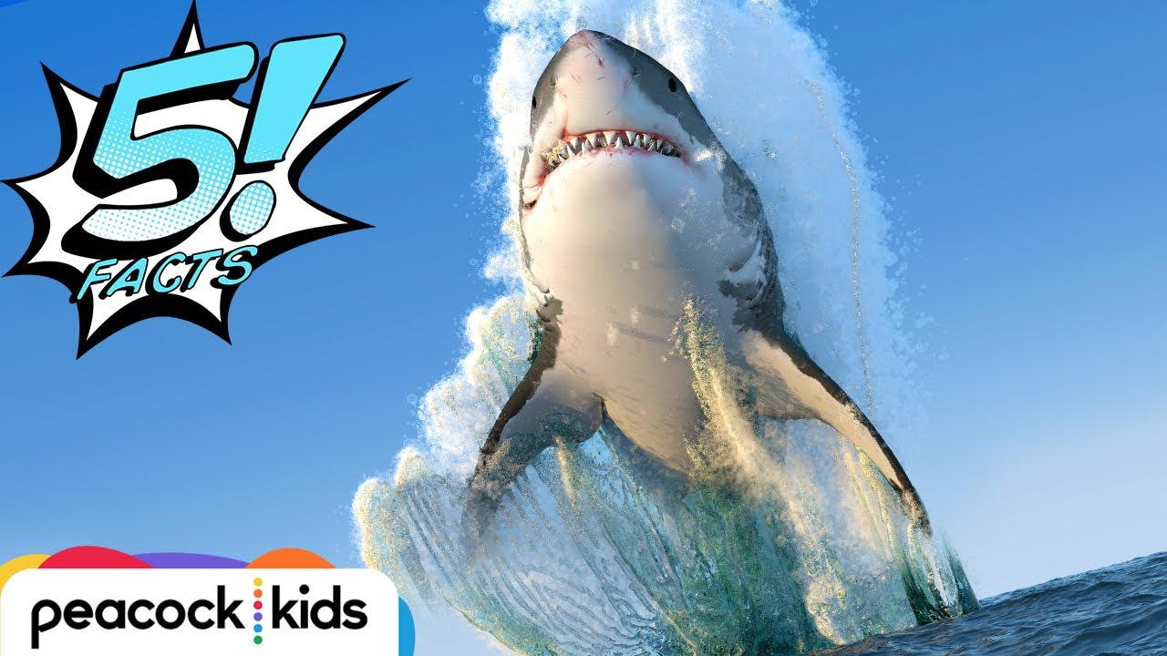 5 Facts About Sharks That Will Make Your JAWS Drop 5 FACTS YouTube