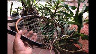 Ghép Lan Trên Giá Thế Bất Kỳ: Vợt Tennis, Mũ Bảo Hiểm Và... Dép! [Hoalan Orchids TV]