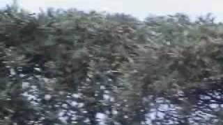AIR SHOW FRECCE TRICOLORI (1 parte) 31 maggio 2009 porn wars