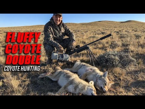 Fluffy Coyote Double - Coyote Hunting