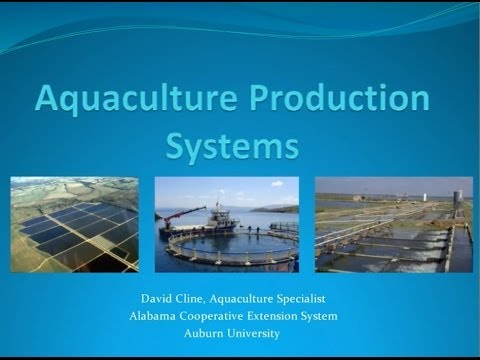 4 Major Aquaculture Production Systems