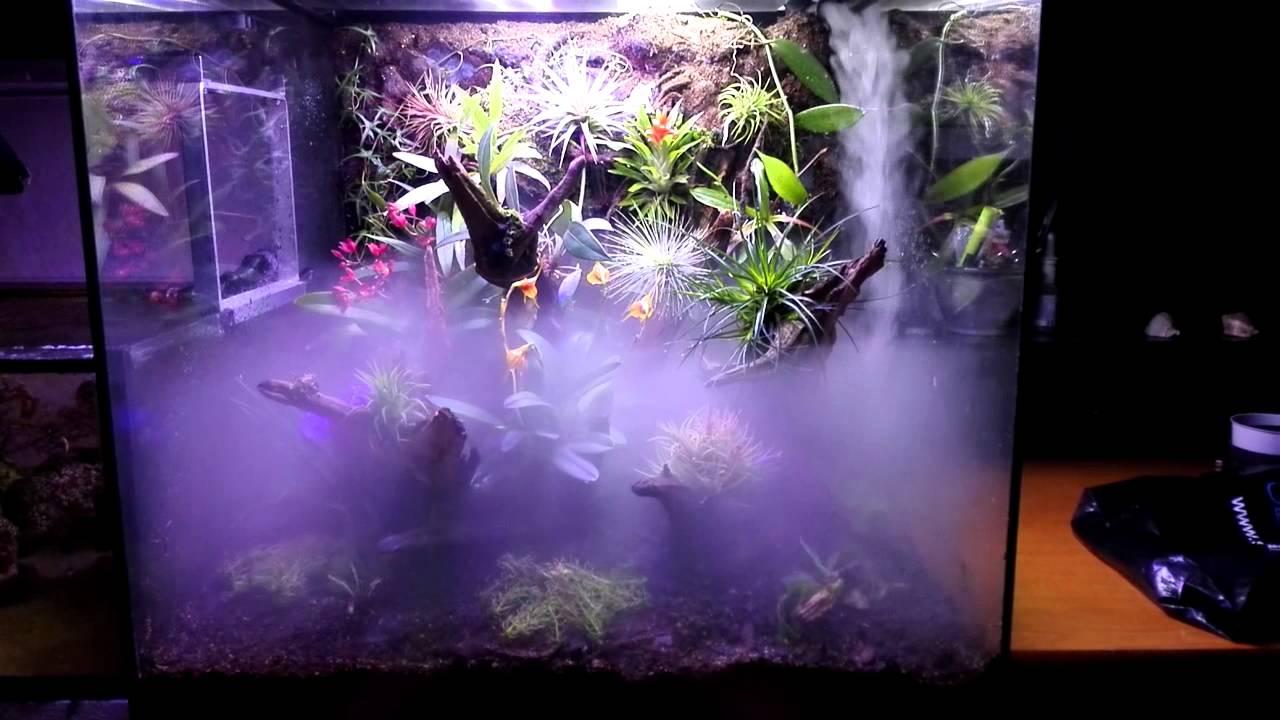 Orchid Terrarium Youtube
