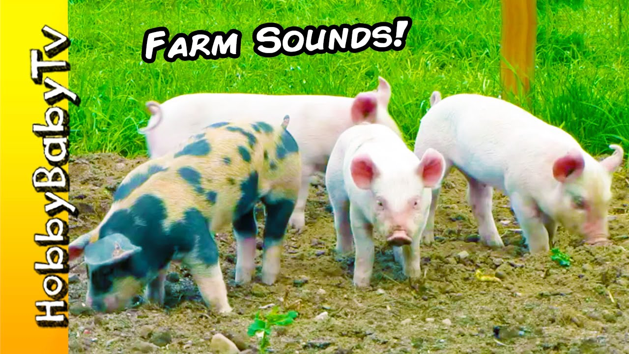 FARM Animals Real Barnyard Pets SOUNDS Learning Fun With HobbyBabyTV