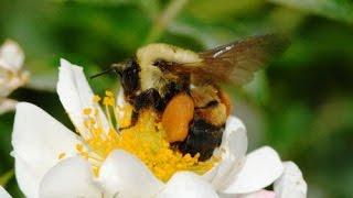 Уроки пчеловодства для начинающих. Самые азы