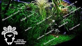 低光量でたのしむ水草水槽(アクアリウム,aquascaping)