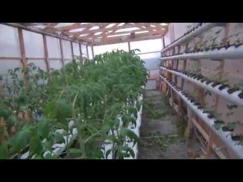 видео: Теплица на гидропонике из поликарбоната. Фермер Глеб