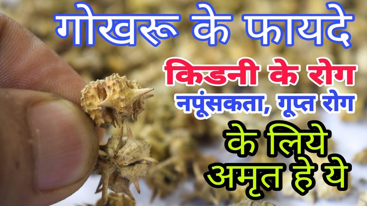 Gokhru(Gokshura) ke Fayde||Kidney ke rog, kidney stone, gupt rog & Napungsakta ka ilaj