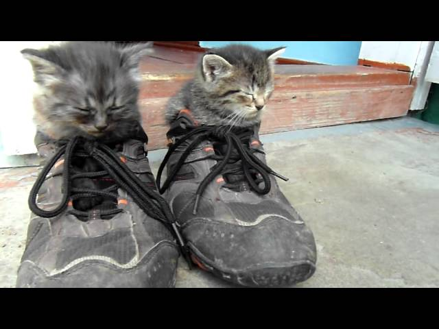 Two brothers cats sleep in my sneakers.MP4