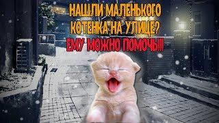 Нашли новорожденного котенка без мамы? Его можно спасти!!!