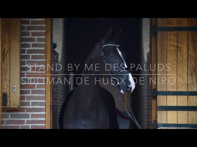 Stand by Me des Paluds en partie vendu aux Pays-Bas