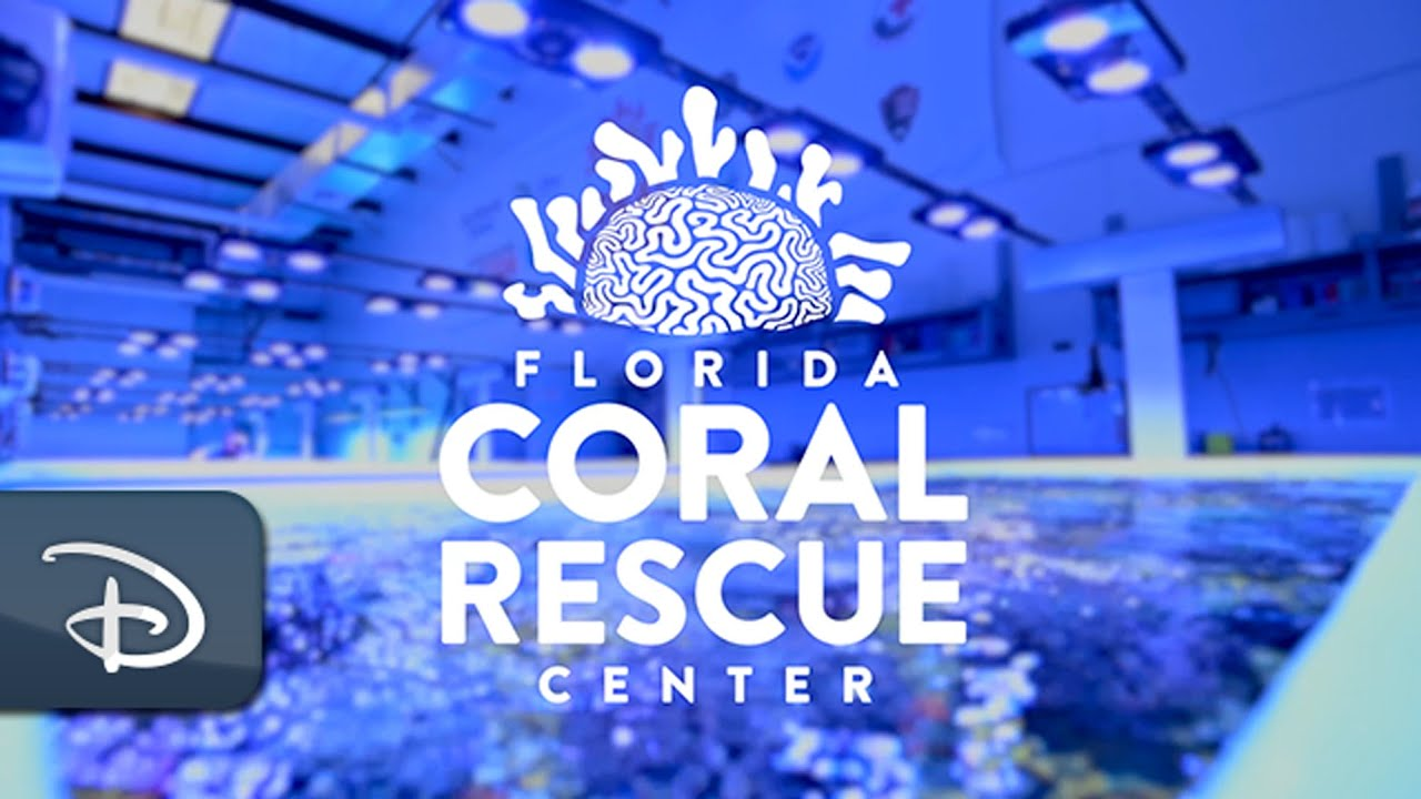Disney Helps Save Florida's Coral Reefs   Disney Parks