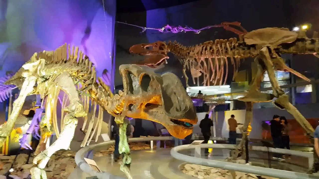 Paseo por el Museo del Desierto Coahuila