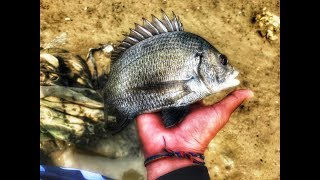 2017.05.06 Lure Fishing | 路亞 | 河口 | 黑鯛