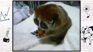 Самое ржачное видео про животных)))