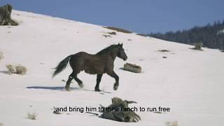 """Goliath movie, """"WILD"""", trailer"""