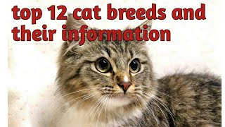 Cat breeds    cat types    cat breed and their information    knowledge with alisha