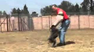 Sa Dog Traning College- Bella-www.sadtc.co.za.flv