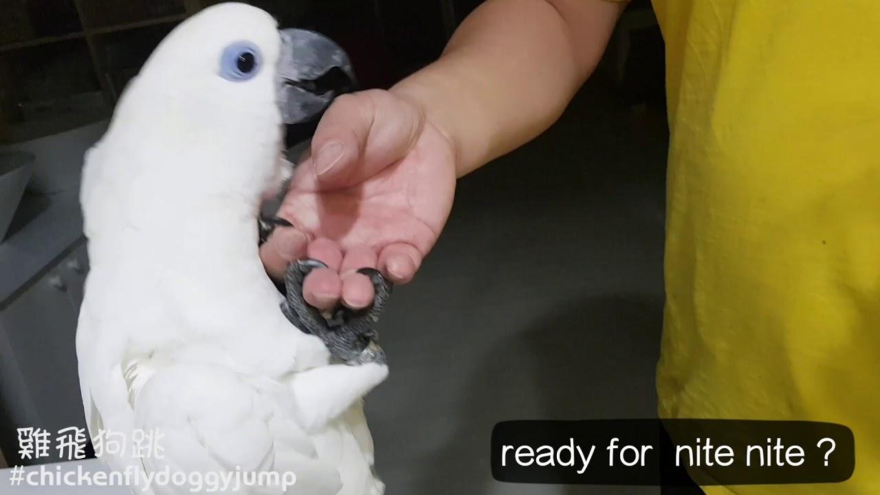 藍眼巴丹阿呆睡搞搞囉 I m ready! - YouTube