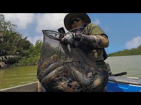 Memancing Udang Galah Kampung Sepakat ( Giant river prawn fishing )