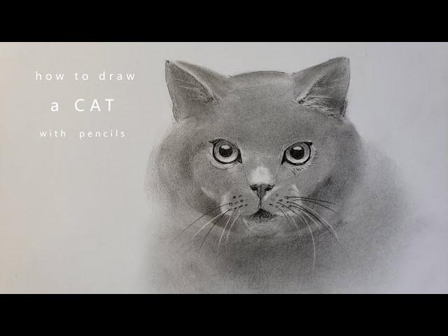 как нарисовать кошку how to draw a cat