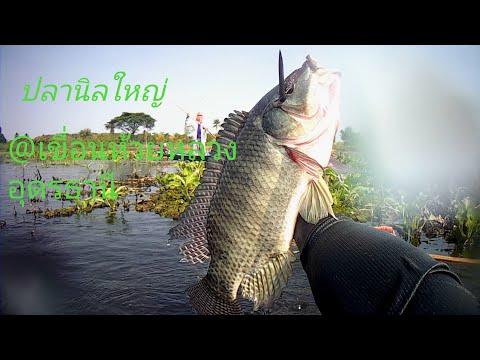 ดำน้ำยิงปลา ปลานิลใหญ่ น้ำไสๆ ที่นักยิงปลาหลายๆคนชอบ@เขื่อนห้วยหลวงอุดรธานี