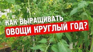 видео Теплицы для выращивания овощей круглый год