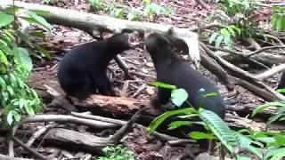 Facial lover a bear gives Mature his