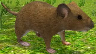 Mouse Simulator | Android Gameplay | By Avelog Android/iOS Episode 1HD