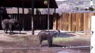 Baby Elephants LOVE Water, Cute Baby Animals