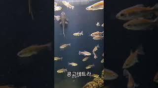 플레이아쿠아리움 1탄~