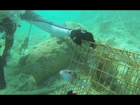 Download Youtube: Rescued fish stuck in death trap!