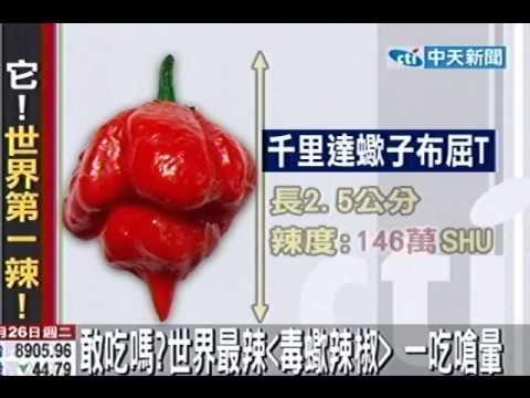 敢吃嗎?世界最辣「毒蠍辣椒」一吃嗆暈 - YouTube