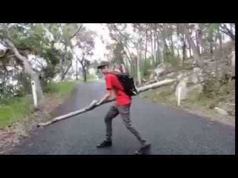 Idiot Knocks Himself Unconscious Throwing A Large Log Youtube