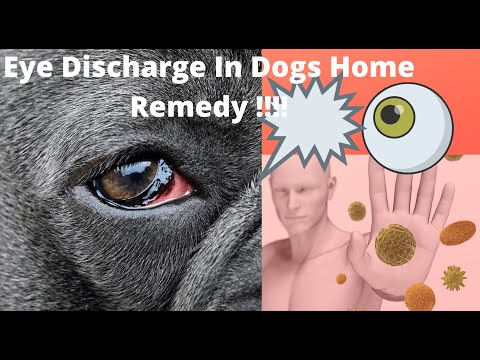 """🔥Tips And Complete Guide """"eye Discharge In Dogs Home Remedy """" 👍"""
