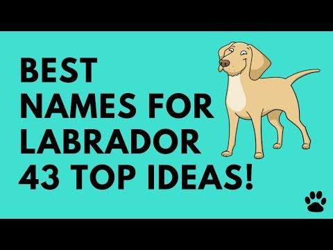 Best Names For Labrador - 43 TOP Ideas! | Names