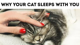 That's Why Your Cat Sleeps with You