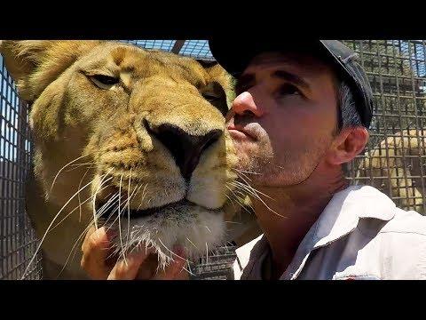 Do Lions Like Catnip? #AskMeg | The Lion Whisperer