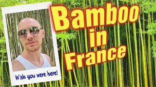 An Asian Bamboo Park in the South of France - Le Parc aux Bombous - Travel Guide by an Englishman