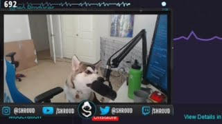 Shroud Dog bite Shroud's Mic and Spill His Coffee (HILARIOUS)