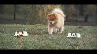 Пёс-прогноз: Virtus Pro против Alliance