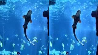 3D video - Sealife Speyer - 4K UHD VR 3D SBS TV